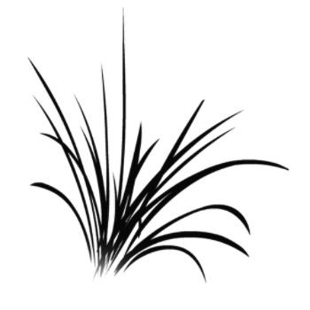 Úvod :: samolepky na stenu :: tráva - samolepky na stenu