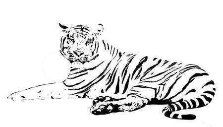 Úvod :: samolepky na stenu :: mačky - samolepky :: samolepka tiger 3